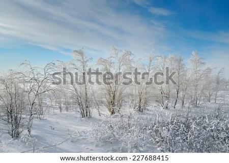 Frozen tree on winter field and blue sky - stock photo