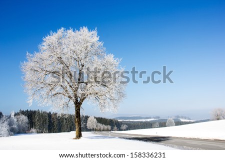 Frozen tree on winter landscape and blue sky (P-format: ID: 223819228) - stock photo