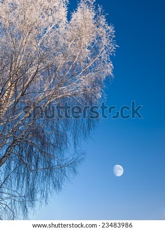 frozen tree over blue sky with moon landscape