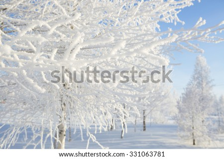 Frozen trees and branches . Beautiful white winter. Blue sky. - stock photo