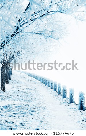 Frozen trees and rural road - stock photo