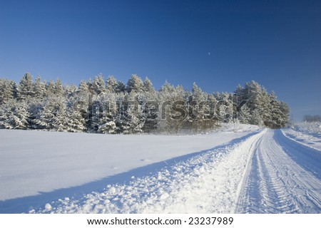 Frozen trees and snowy land road at winter, deep blue sky with moon - stock photo