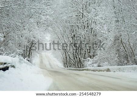 Frozen trees in field with. Winter landscape. - stock photo
