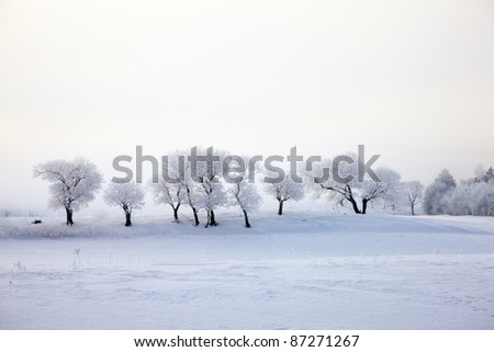 Frozen trees in frosty nature - stock photo