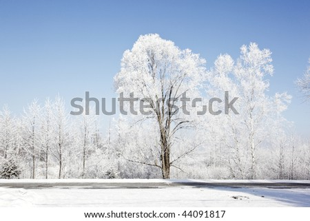 frozen trees in the northeast of china - stock photo