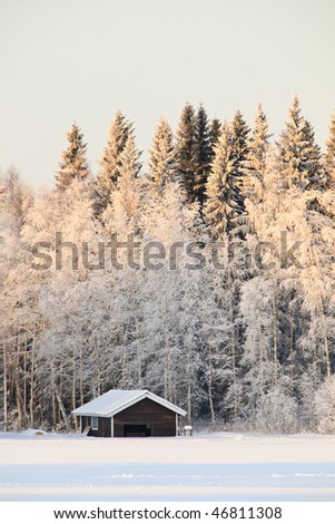 Frozen trees in the winter forest - stock photo