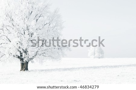 Frozen trees in white snowy field - stock photo