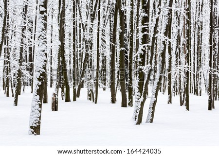 Frozen trees in winter beech forest - stock photo