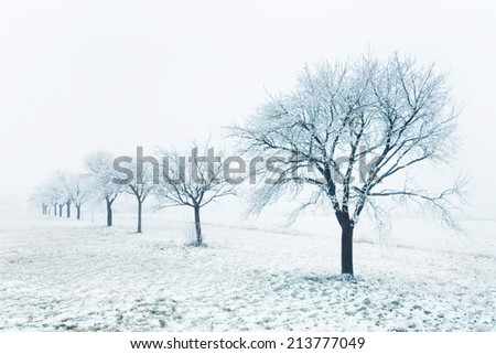 Frozen trees on a cloudy winter day - stock photo