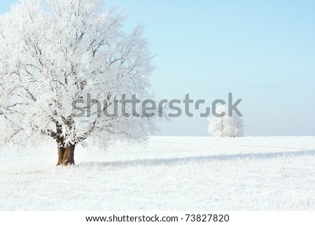 Frozen trees on winter field and blue sky - stock photo