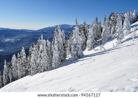 Frozen trees with snow in the Carpathian mountains, Romania - stock photo