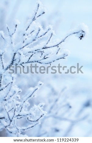frozen winter plant - stock photo