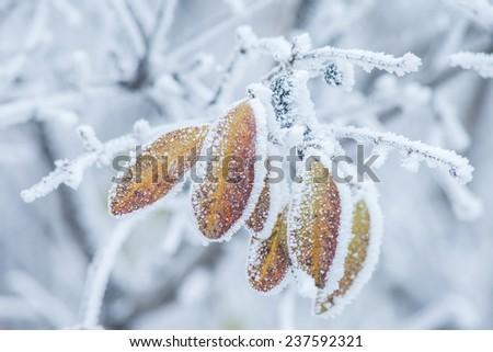Frozen winter tree. Macro shot with small depth of field - stock photo