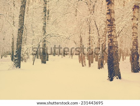 frozen woods covered with snow, retro filtered, instagram style - stock photo