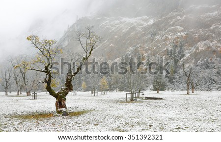Frozen world~ Beautiful maple trees and the first snow by the mountainside on a misty gloomy day in deep autumn in Austrian Alps - stock photo