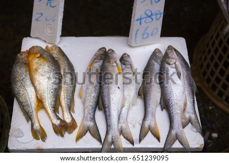 Croaker fish stock images royalty free images vectors for Fish stocking prices