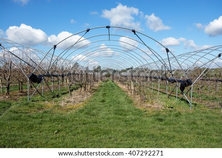 Fruit cages in a Kent orchard
