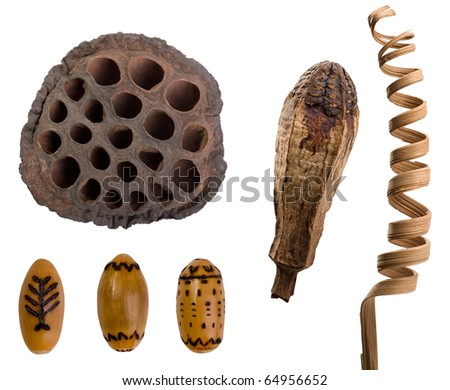 Fruit of lotus flower, acorns with  an  ornament, dry plants - stock photo