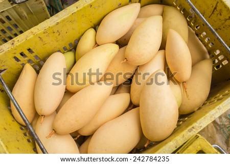 Fruit of Mango cultivars Nam Dok Mai See Thong - stock photo