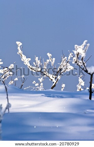 fruit orchard in winter covered in snow - stock photo
