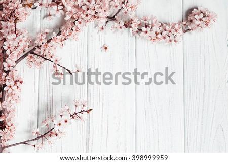 fruit tree flowers on white wooden background. - stock photo
