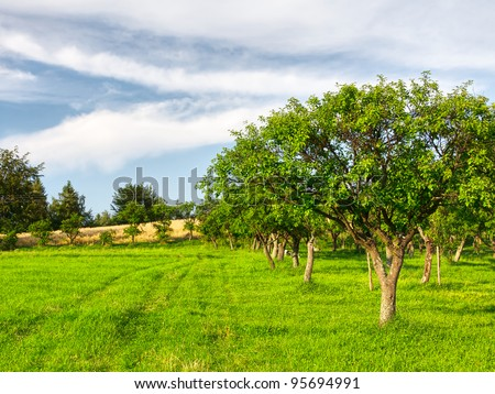 Fruit trees in a summer orchard - stock photo