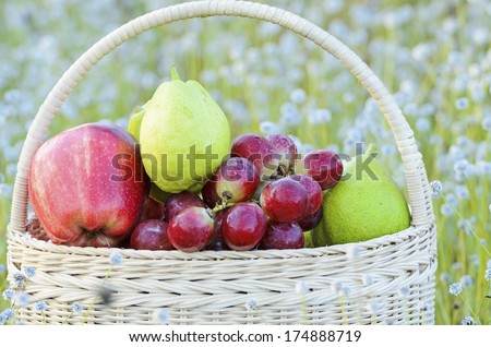Fruits in basket on field of wild flower - stock photo