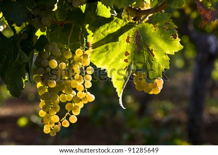Fruits of nature - stock photo