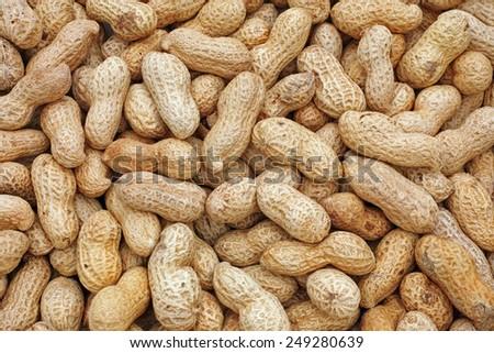 fruits of the peanut plant - stock photo