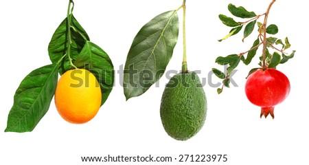 Fruits on a branch. Isolated on white background. Ripe orange fruit, pomegranate and avocado - stock photo