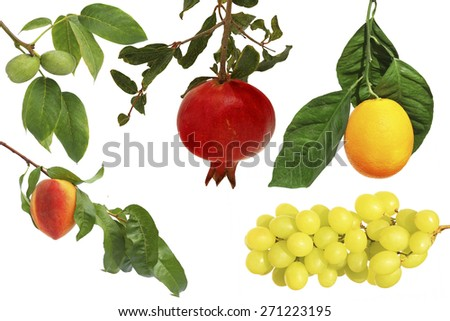 Fruits on a branch. Isolated on white background. Ripe peach fruit, orange, pomegranate,walnuts and grape cluster  - stock photo