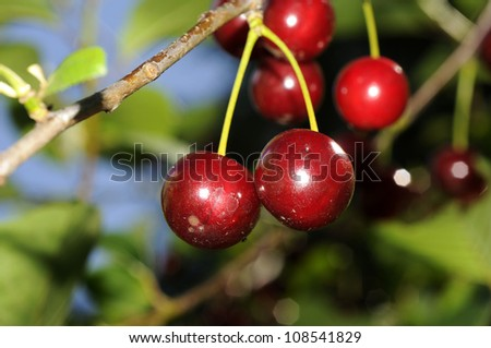Fruits on wooden background - stock photo