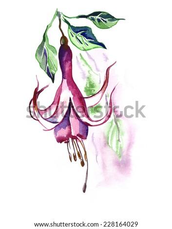 Fuchsia Seamless Pattern - Stock Photo
