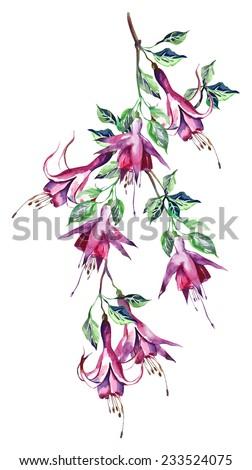 Fuchsias Seamless Pattern - stock photo