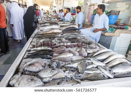 Fujairah uae dec 1 2016 fish stock photo 561726577 for Fish stocking prices