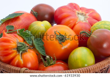 Full basket of homegrown organic heirloom tomatoes during harvest time. - stock photo
