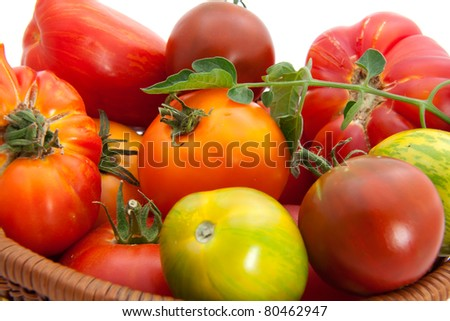 Full basket of homegrown organic heirloom tomatoes during harvest time.