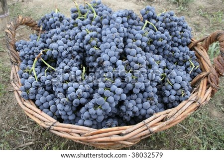 Full basket with grapes