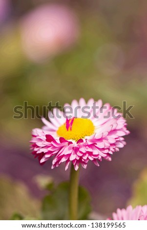 Full-blown pink flower on grass - stock photo