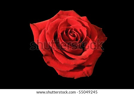 full-blown red rose on the black background - stock photo