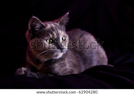 Full body image of a lovely cat on a black background - stock photo