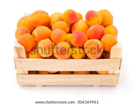 Full crate of fresh ripe apricots (Prunus armeniaca)