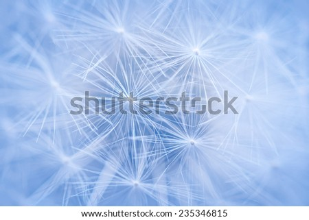 Full dandelion seed head macro close up as background with focus on pappus - stock photo