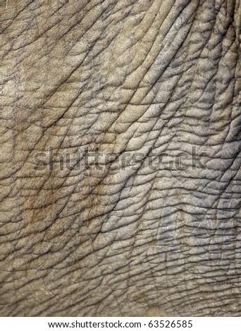 full frame close up of asian elephant wrinkly skin, thailand, asia background - stock photo