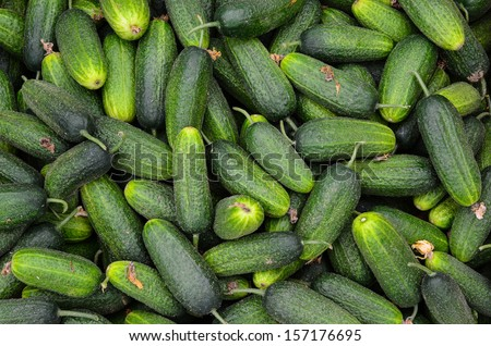 Full frame of cucumbers background - heap of cucumbers in wooden crate ready for sale - stock photo