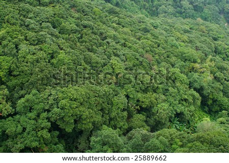 Full frame of green tropical forrest - stock photo