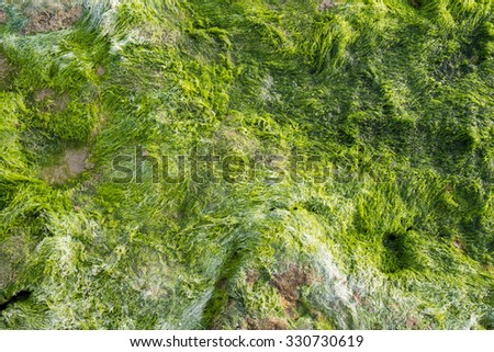 Full frame take of a rock overgrown with moss