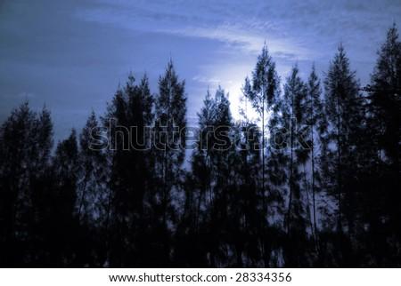 Full moon And Pine ,Long Exposure - stock photo