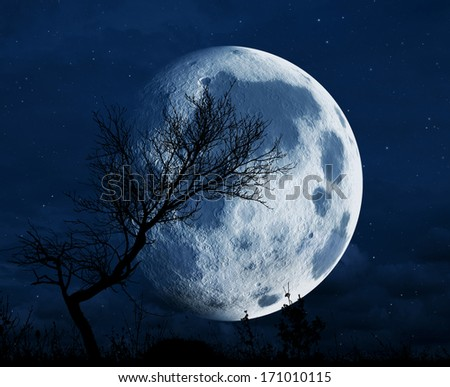 Full moon and tree silhouette in the night - stock photo