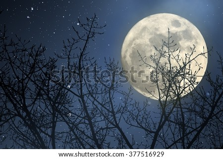 Full moon behind naked tree branches in a starry night - stock photo